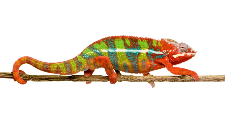 Like The Chameleon, My Life Is Always Changing